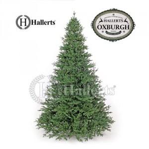 Hallerts Nobilistanne Oxburgh - künstlicher Weihnachtsbaum